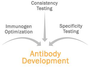 antibody-reproducibility-standards
